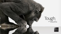 Corning_GorillaGlass_Wallpaper1_1600x900